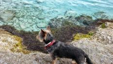 Xana buscando peces en Cala en Turqueta