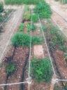 Lechugas,hierbas aromáticas,cebollas